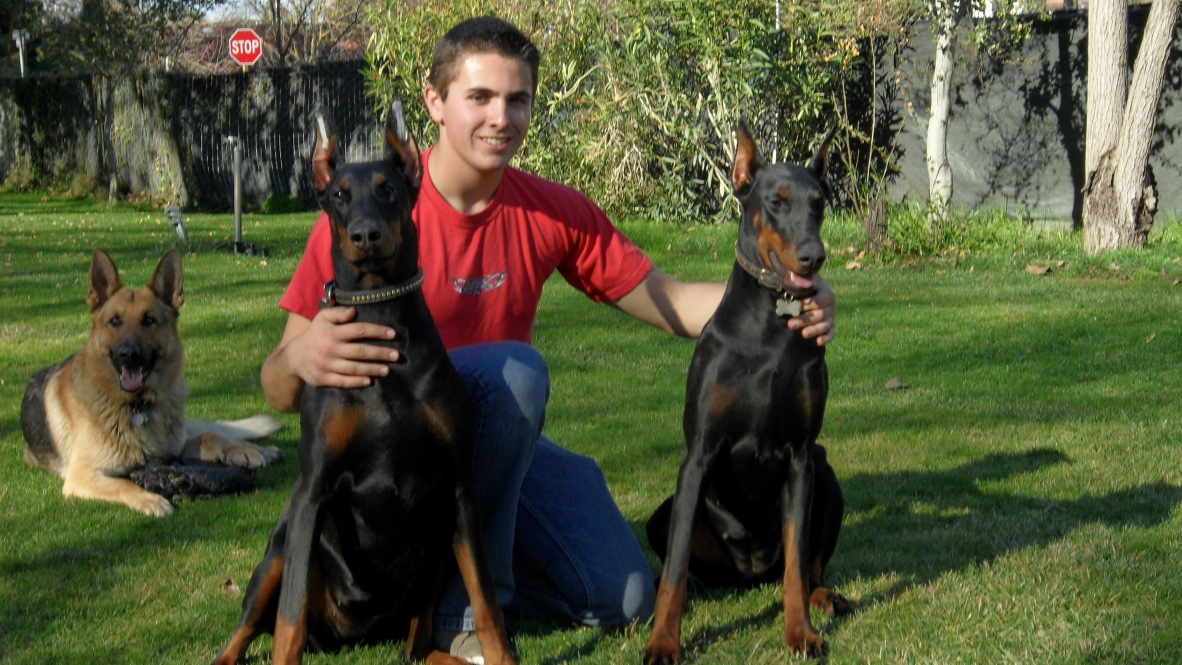West_Coast_Doberman_Ranch_European_Puppies_For_Sale_AKC